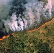 L'Amazonie en feu et accord Mercosur