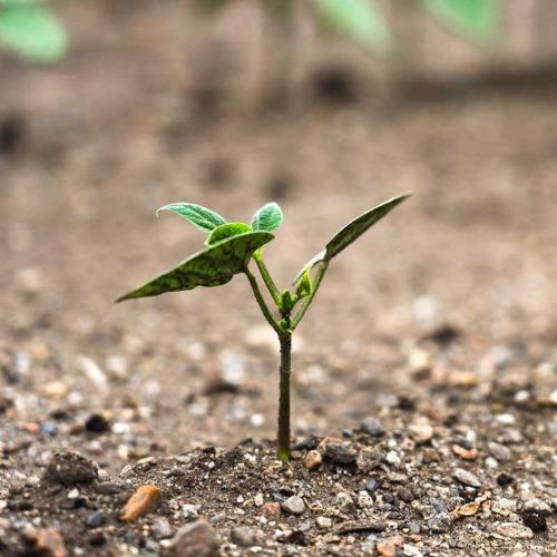 Des sols sains pour sauver le climat