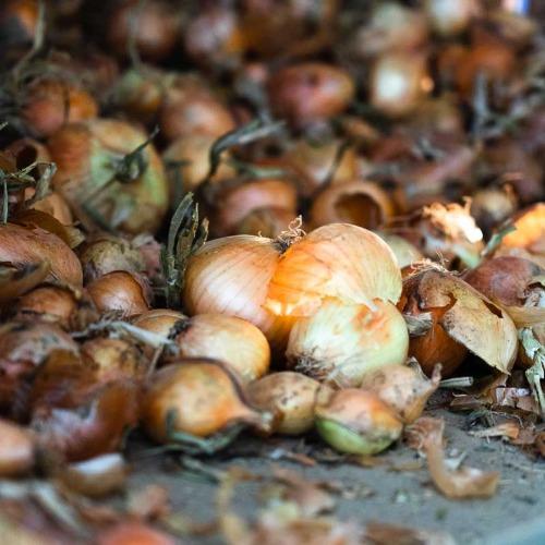 Gaspillage alimentaire : un défi majeur